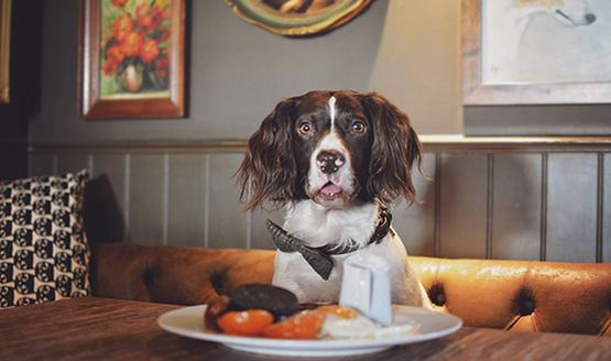 DINE WITH YOUR DOG