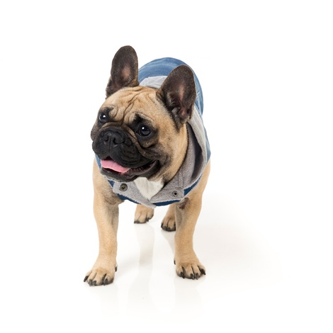 Crew Denim Dog Hoodie 4