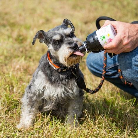 Paws 500ml Pet Water Bottle 4