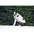 Star Stripe Cashmere Dog Sweater 2