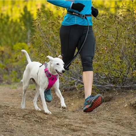 Front Range™ Dog Harness Alpenglow Pink 6