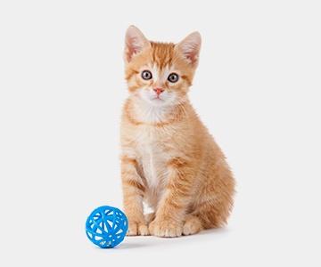 Kitten Essentials
