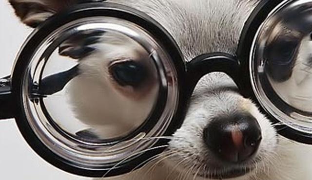 Doggy Chums - Tunbridge Wells