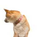 Pink Geo Dog Collar 4