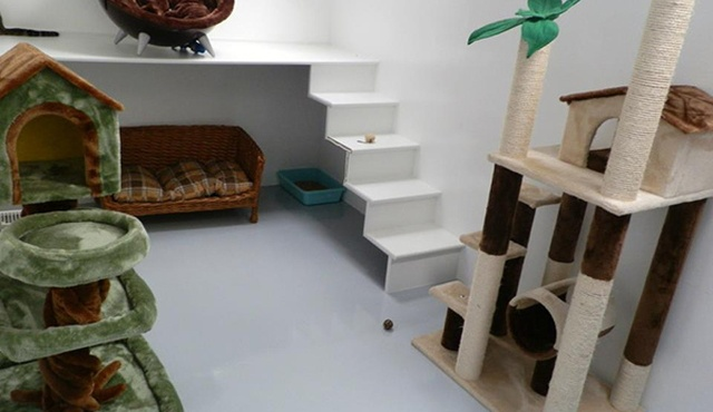 Elmtree Luxury Pet Hotel 3