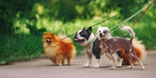 Top 10 Dogs that need the least walking