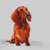 Paint My Dog  - Sitting Dachshund Art Print
