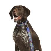 "Pet Pooch Boutique - Pow! Cartoon Collar - Blue  1"" Width"