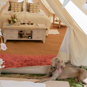<strong>Bells & Stars Glamping, Suffolk:</strong> Camp in style with your pet in these gorgeous bell tents