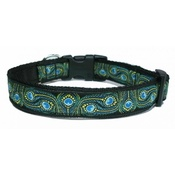 Woof and Meow - Peacock Feather Dog Collar