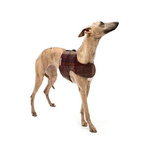 Grape Check Tweed Dog Harness