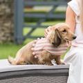 Stripe Pom Pom Dog Harness 3