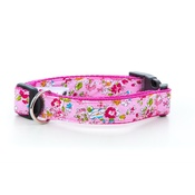 Pet Pooch Boutique - Pepper Dog Collar