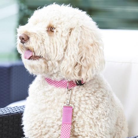 """Polka Dot Dog Collar - Pink  1"""" Width 3"""