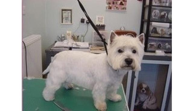 Tangles Dog Salon