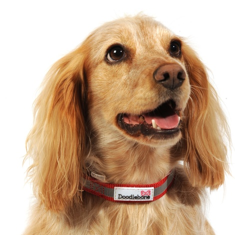 Bold Reflective Dog Collar – Red 2