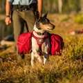 Palisades Dog Pack - Red Currant 4