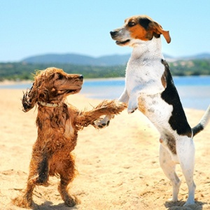 Why we love pet-friendly Kent and Sussex