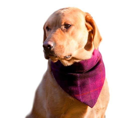 Check Harris Tweed Dog Bandana & Owner Scarf - Fuchsia