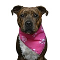 Pink Pirate Dog Bandana 2