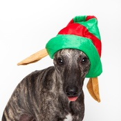 Doggy Things - Doggy Things Elf Hat