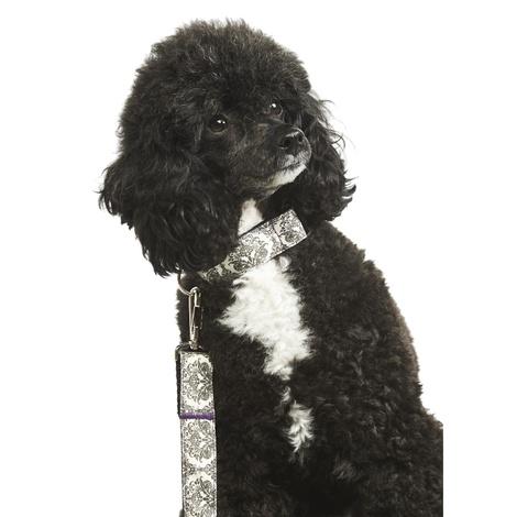 Maison Dog Lead 2