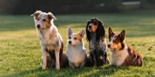 Which dog breed suits your lifestyle?