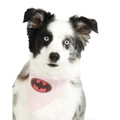 Pet Pooch Boutique - Batgirl Dog Bandana
