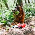 Ryan the Rhino Beetle Plush Dog Toy 3