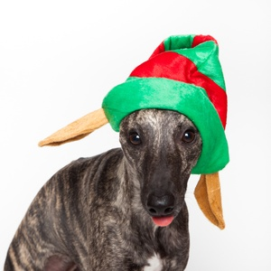 Doggy Things Elf Hat
