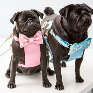 SHOP FOR YOUR PUG