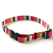 Yellow Dog - Multi-Stripe Collar