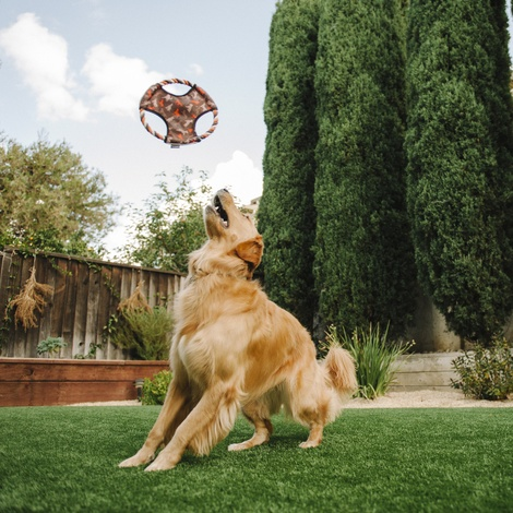 Scout & About Flying Disc Dog Toy 3
