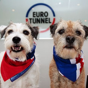 Here are our top tips for a stress-free Eurotunnel crossing with your pet
