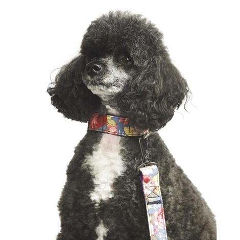 Sapphire Rose Dog Collar 2