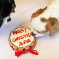 Small Christmas Dog Cake  3