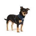 Airmesh Dog Harness – Navy 4