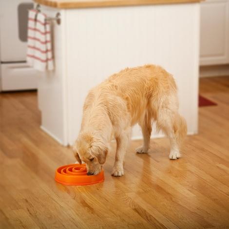 Coral Summer Orange Slow Feeder Dog Bowl 3