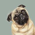 Tan Pug Art Print