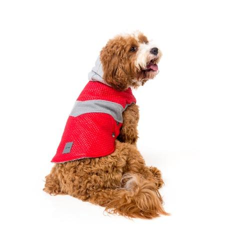 Brooklyn Dog Hoodie 4