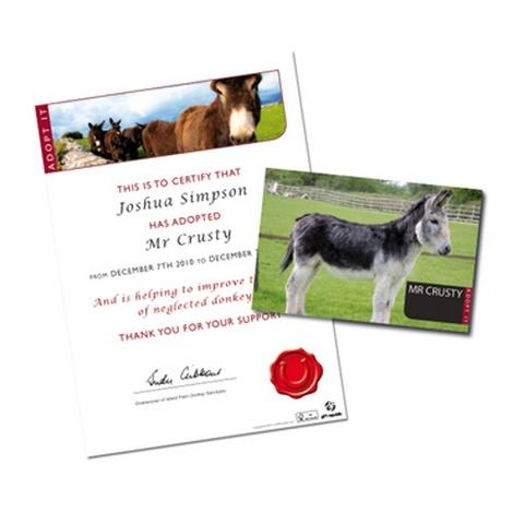 Adopt A Donkey Gift Box 3