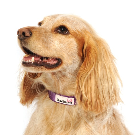 Bold Dog Collar – Purple 2