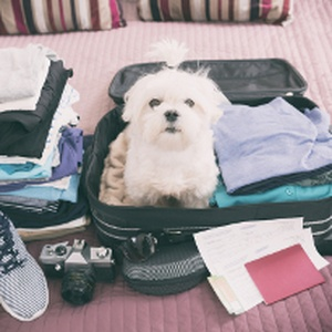 Is your pet all packed? Top 10 Travel Pet Essentials