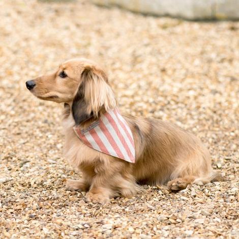 Orange Stripe Brushed Cotton Dog Bandana 2