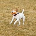 Ruffwear Gourdo Dog Toy - Orange Sunset 3