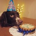 Mini Personalised Dog Cake 2