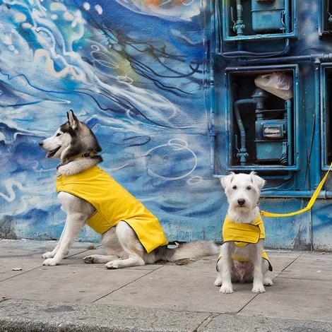 Pawditch Yellow Dog Lead 3