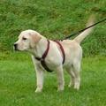 Khaki Wool Dog Harness 2