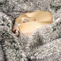 Faux-Fur & Fleece Dog Blanket - Squirrel