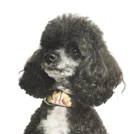 Sapphire Rose Dog Collar 6